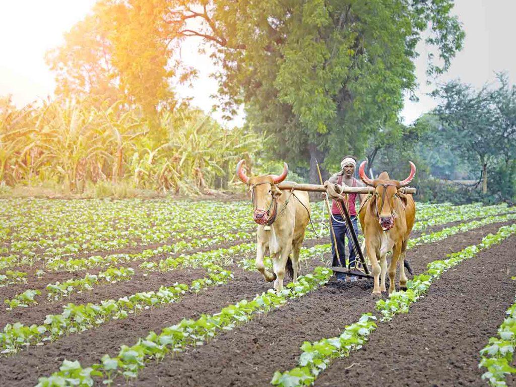 Castor Farming